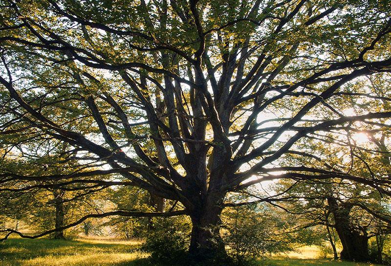 eiche – eichen – die eiche – wildenstein – bubendorf – naturschutzgebiet wildenstein – baselland – baselbiet – basel-landschaft – bl – naturschutzgebiet – schloss wildenstein – buch – die eiche königin aller bäume – foto-kolumne – volksstimme – volksstimme die zeitung für das oberbaselbiet – eichenbäume – eichel – stieleiche – stiel-eiche – quercus robur – traubeneiche – trauben-eiche – quercus petraea – eichenhain – eichenwitwald – eichenwytwald – baum-skulptur – baumskulpturen – baum – bäume – laubbaum – natur – baum-bilder – baumbilder – le chêne – oak – the oak – oaks – oak trees – oakwood – oakwood-pasture – nature reserve – art book – the oak sovereign among the trees – acorn – pedunculate oak – sessile oak – tree-sculptur – tree sculptures – tree – trees – deciduous trees – nature – art – kunst – art paintings – art photography – fotografie – by sabina roth – sabina roth – roth – fotografin – fotograf – basel – www.sabinaroth.ch – www.instagram.com/sabinaroth_photography/ – @sabinaroth_photography – photographer – basel-stadt – basel-land – nordwestschweiz – zürich – schweiz – emotionale bilder – naturfotografie – landschaftsfotografie – architekturfotografie – porträts – reportagen – experimentelle fotografie – werbung – fotografie + kommunikation – peter gartmann – peter walther gartmann – walther gartmann – gartmann – www.petergartmann.ch – www.instagram.com/petergartmann_art/ – @petergartmann_art – art + photography – kunst + fotografie – switzerland – collection susanne minder – bildarchiv susanne minder – susanne minder – minder – susanne minder art picture collection – susanne minder photo collection – www.susanneminder.ch