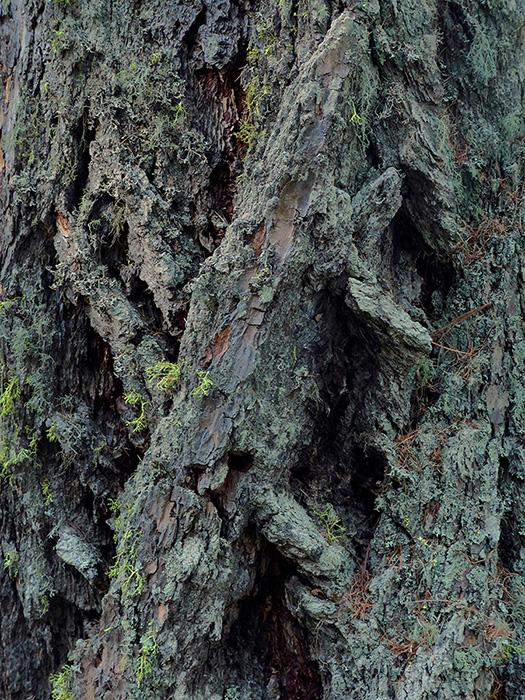 the skin of the trees – die haut der bäume – baum – bäume – rinde – borke – baum-bilder – baumbilder – skin – trees – baum-skulpturen – tree sculptures – sehnsucht – liebe – leben – art – kunst – art photography – fotografie – by sabina roth + peter gartmann – sabina roth – roth – peter gartmann – peter walther gartmann – walther gartmann – gartmann – art + photography – kunst + fotografie – basel – zürich – schweiz – switzerland – represented by marco stücklin – www.marco-stuecklin.ch – marco stücklin – stücklin – stuecklin – susanne minder art picture collection – susanne minder photo collection – collection susanne minder – bildarchiv