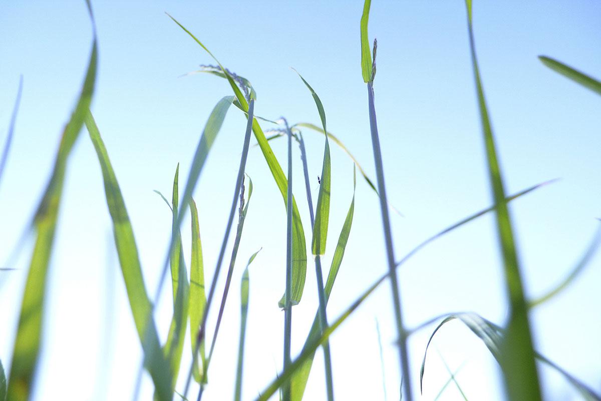 grasgrün – grün, farbe der hoffnung, der natur und des lebens – sabina roth – fotografie + visualisierung, reigoldswil – basel, münchenstein, zürich