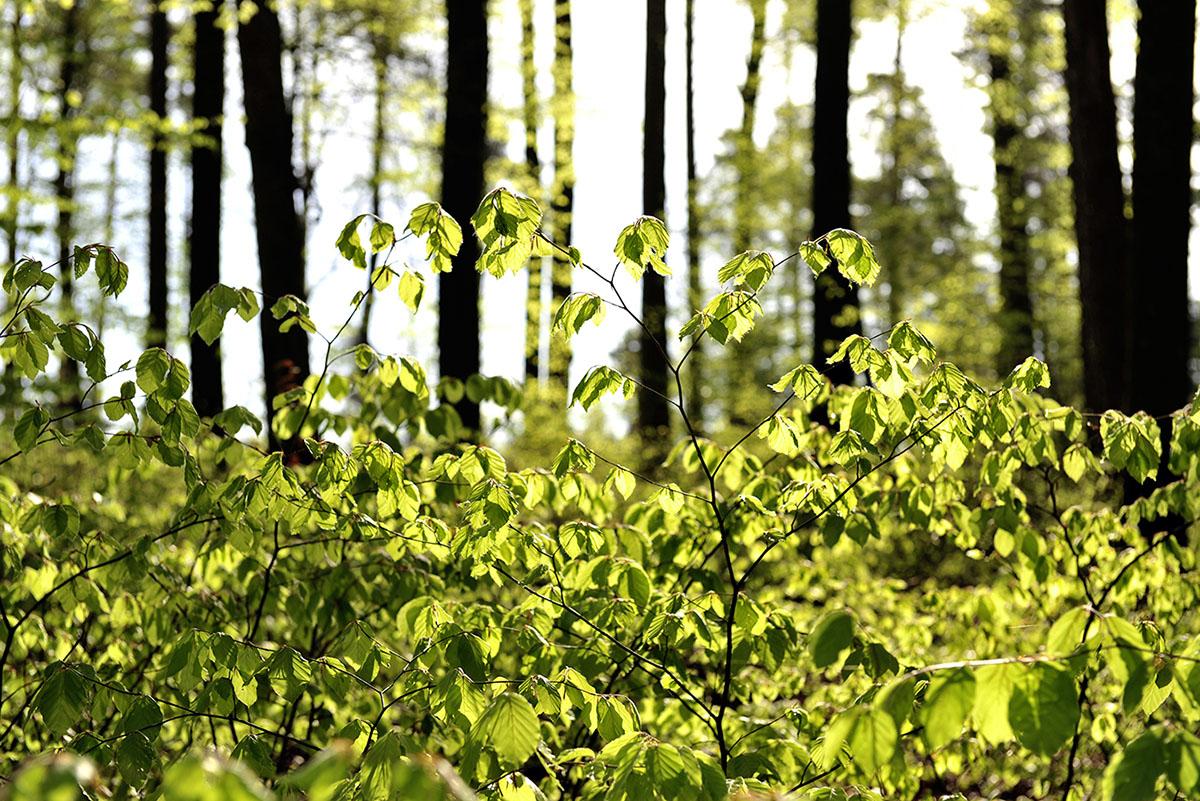 der blauenwald im leimental – grenzenlose schönheit – buch für binding stiftung + amt für wald beider basel – buch + fotos sabina roth + peter gartmann, basel, zürich, münchenstein, reigoldswil