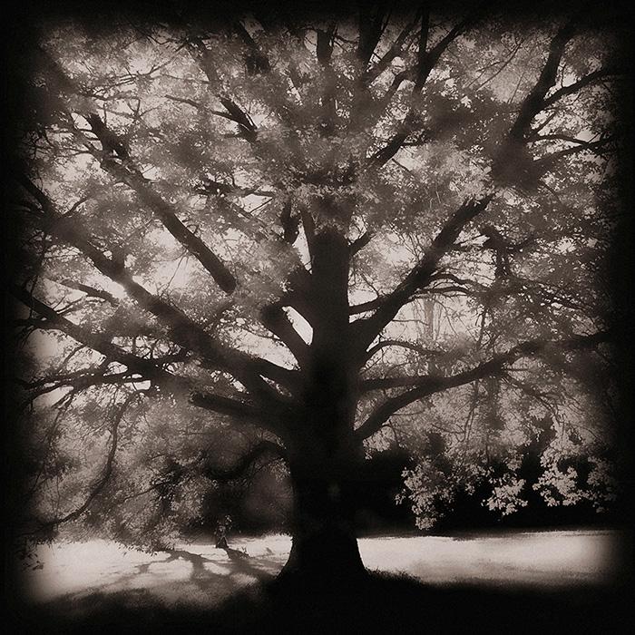 der ruf des lichts – wunder baum im licht – the call of light – baum-skulptur – baumskulpturen – baum-bilder – baumbilder – das licht der bäume – verhüllte bäume – wrapped trees – christo – christo and jeanne-claude – christo jeanne-claude – wachsen ins licht – wachstum ins licht – wachstum – ins licht – licht – sonne – sonnenlicht – schöpfung – leben – universum – unendlichkeit – kosmos – erde – baum – baumwesen – wildenstein – naturschutzgebiet wildenstein – eichen – eichenwitwald – wurzeln – blätter – geheimnis – staunen – martin vosseler – vosseler – art – kunst – artworks – art photography – fotografie – by © sabina roth + peter gartmann – copyright © sabina roth + peter gartmann – sabina roth – roth – fotografin – fotograf – basel – baselland – www.sabinaroth.ch – www.instagram.com/sabinaroth_photography/ – @sabinaroth_photography – photographer – basel-stadt – baselbiet – basel-land – basel-landschaft – nordwestschweiz – zürich – schweiz – emotionale bilder – naturfotografie – landschaftsfotografie – architekturfotografie – porträts – reportagen – experimentelle fotografie – werbung – fotografie + kommunikation – peter gartmann – peter walther gartmann – walther gartmann – gartmann – www.petergartmann.ch – www.instagram.com/petergartmann_art/ – @petergartmann_art – art + photography – kunst + fotografie – switzerland – collection susanne minder – bildarchiv susanne minder – susanne minder – minder – susanne minder art picture collection – susanne minder photo collection – www.susanneminder.ch
