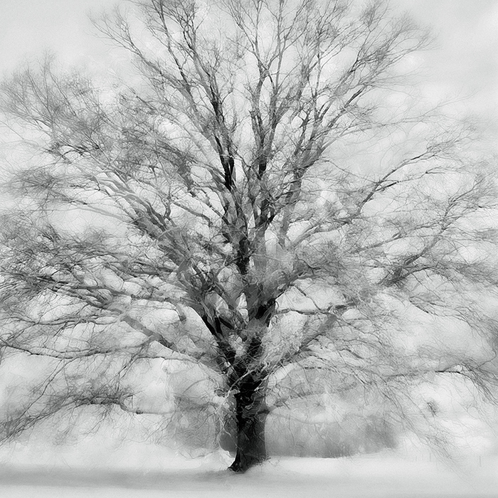 sabina roth + peter gartmann – christo and jeanne-claude – wrapped trees – christo – art + photography – kunst + fotografie, basel, zürich, schweiz – switzerland – art – kunst – trees – tree sculptures – art paintings – art book – the light of trees – bäume – baumskultpuren – das licht der bäume – kunstkatalog – fondation beyeler – ernst beyeler – riehen – photos – fotos – represented by marco stücklin – www.marco-stuecklin.ch – susanne minder art picture collection – susanne minder photo collection – bildarchiv – daniel blaise thorens fine art gallery – daniel thorens