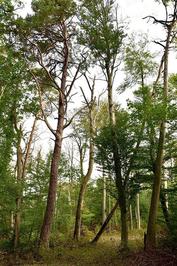 wald basel – trockenschäden – trockenschäden im wald – trockenheit – www.wald-basel.ch – afw – amt für wald beider basel – ueli meier – basel-landschaft – baselland – baselbiet – basel-stadt – buche – buchen – rotbuche – eschen – fichten – rottannen – weisstannen – wald – baum – bäume – laubbaum – nadelbaum – borkenkäfer – buchdrucker – hardwald – waldeigentümer – forstbetriebe – bürgergemeinde der stadt basel – www.bgbasel.ch – forstbetrieb der bürgergemeinde der stadt basel – christian kleiber – art – kunst – art paintings – art photography – art + photography – fotografie – fotografie + kommunikation – by sabina roth – sabina roth – roth – www.instagram.com/sabinaroth_photography – art + photography – kunst + fotografie – basel – baselland – zürich – schweiz – switzerland – peter gartmann – peter walther gartmann – walther gartmann – gartmann – www.instagram.com/petergartmann_art – susanne minder art picture collection – susanne minder photo collection – collection susanne minder – bildarchiv susanne minder – susanne minder – minder