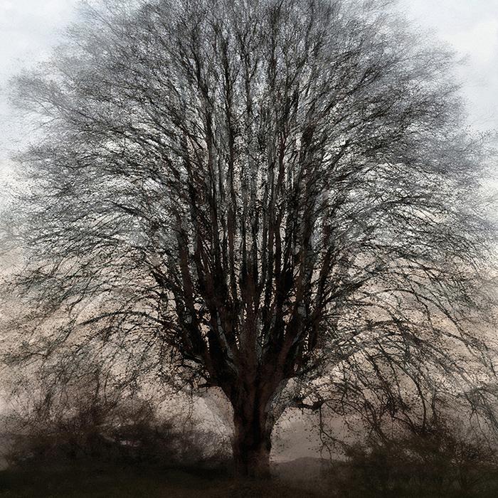 art book and art paintings – the light of trees – trees   tree sculptures – by sabina roth + peter gartmann – art + photography – kunst + fotografie, basel, zürich, schweiz – switzerland – represented by marco stücklin – www.marco-stuecklin.ch – christo and jeanne-claude – wrapped trees – christo – art – kunst – kunstkatalog – fondation beyeler – ernst beyeler – riehen – photos – fotos – susanne minder art picture collection – susanne minder photo collection – susanne minder bildarchiv